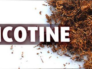 Nicotin là gì? Cơ chế gây nghiện và tác hại của Nicotine